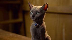 Magical kitten