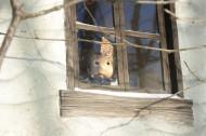 window_0517